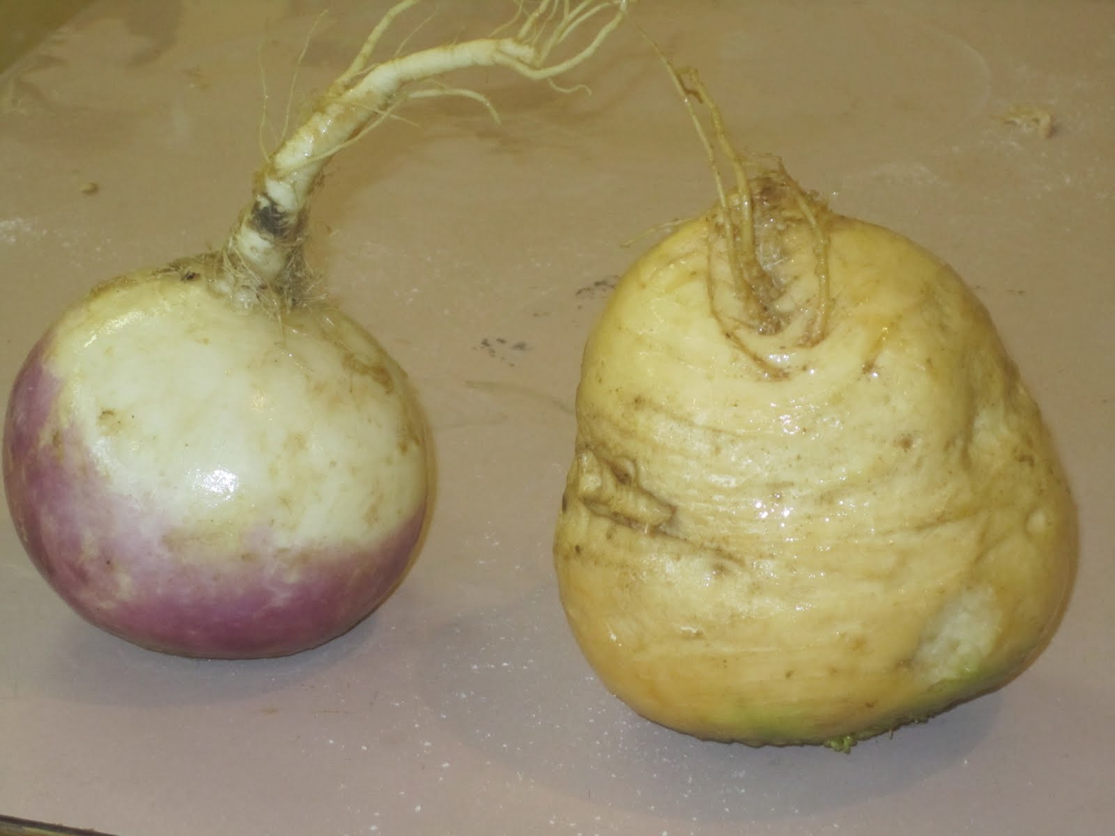 Difference+between+turnip+and+swede
