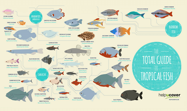 The Total Guide to Tropical Fish
