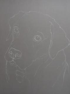 dessin de labrador