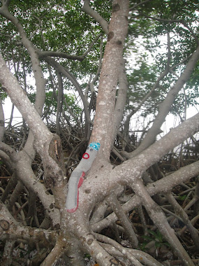 Jorge in Belizean Mangroves