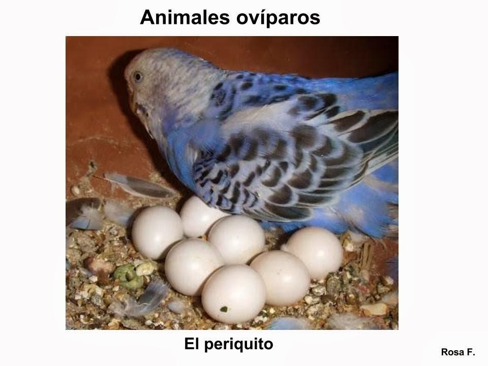 Animales Que Nacen De Huevos Para Preescolar