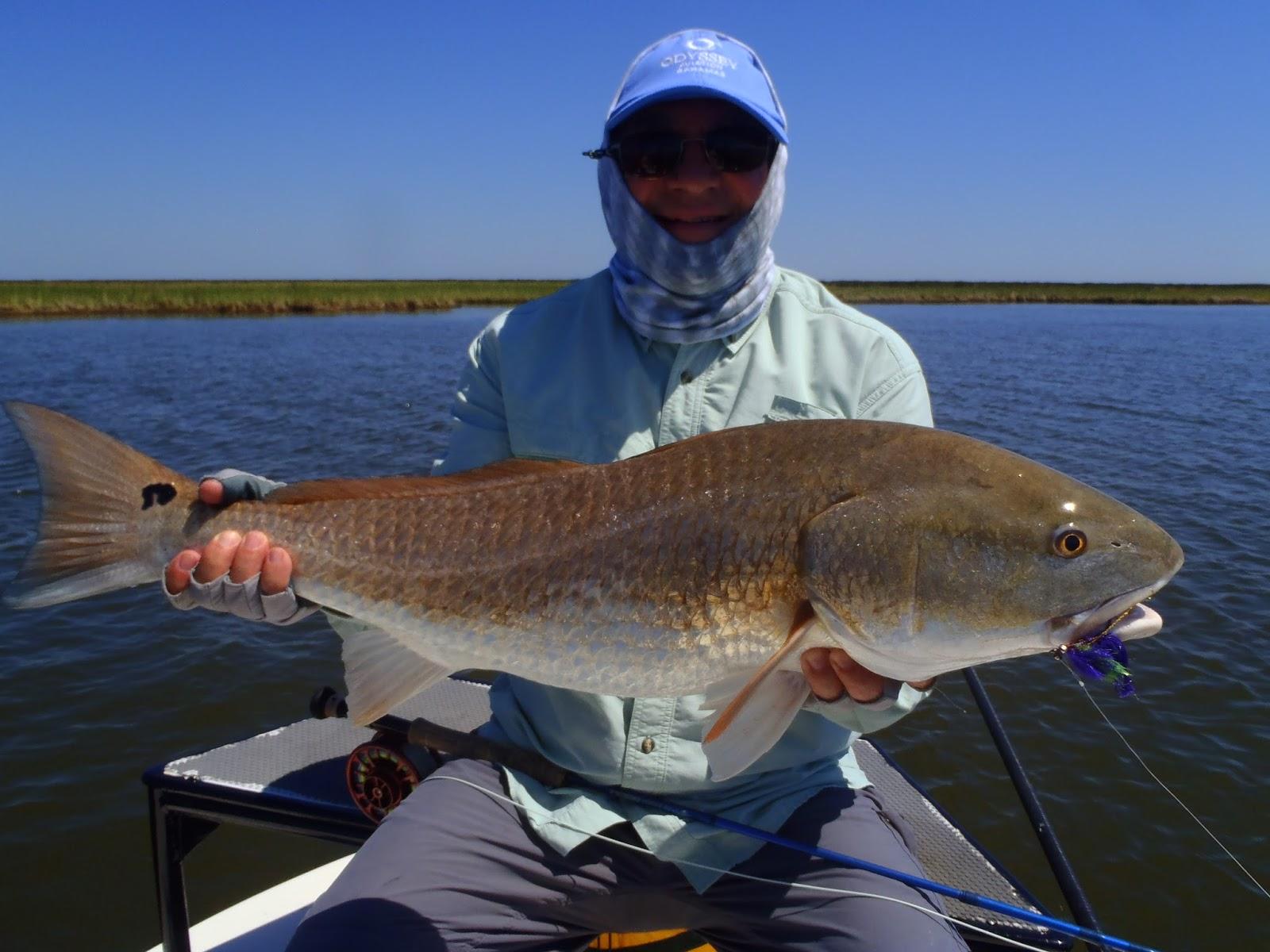 Redfishing Louisiana A Guides Journey Louisiana Redfish
