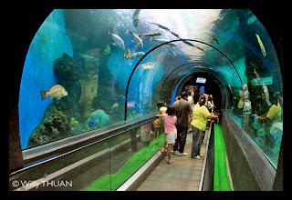 L'aquarium de Phuket a Cape Panwa