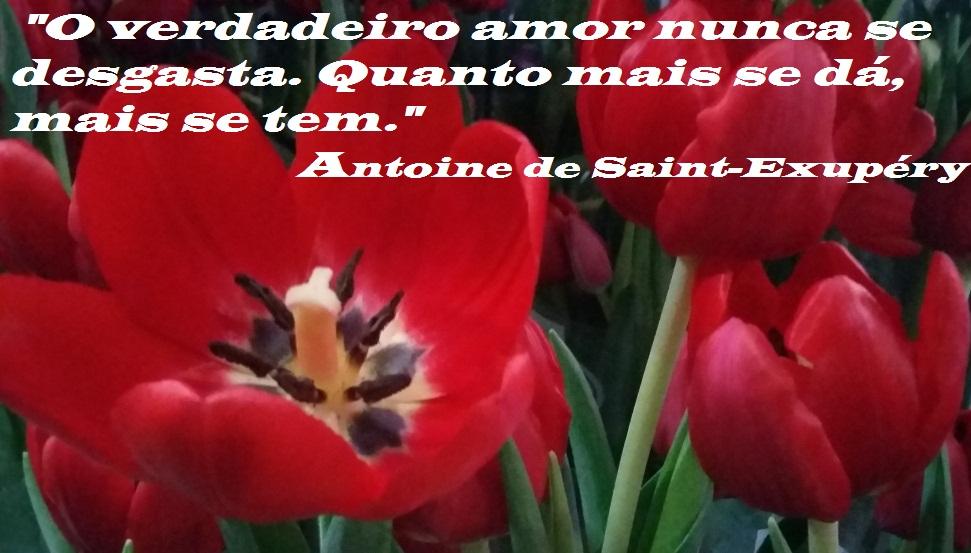 O verdadeiro amor...