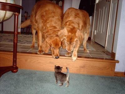 smiješne slike mačke psi