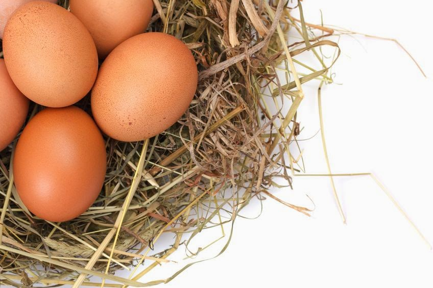 7 Reasons You Should Start Eating Eggs