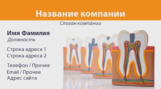 http://www.poleznosti-vsyakie.ru/2014/05/vizitka-maket-zuba-v-razreze.html