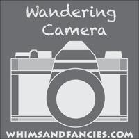 Wandering Camera