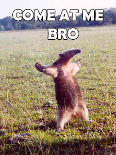 [Image: Come+at+me+bro+anteater.jpg]