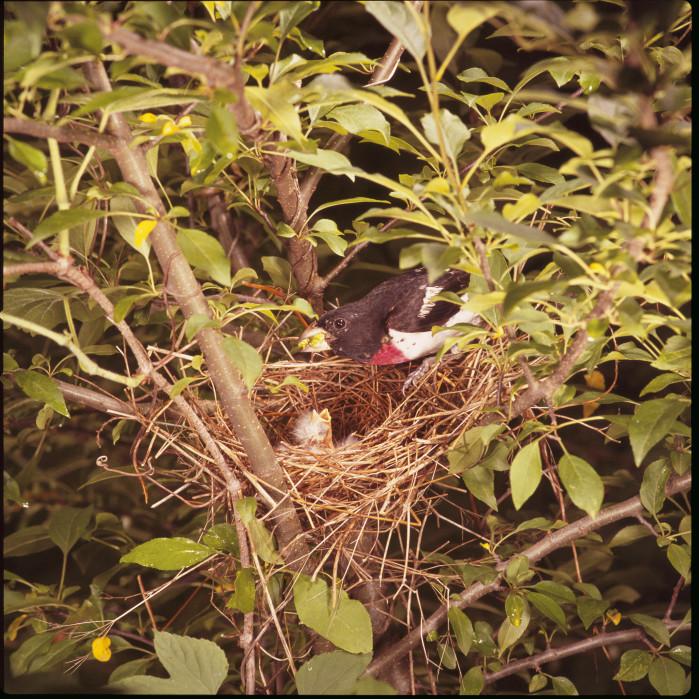 red bird nest and - photo #20