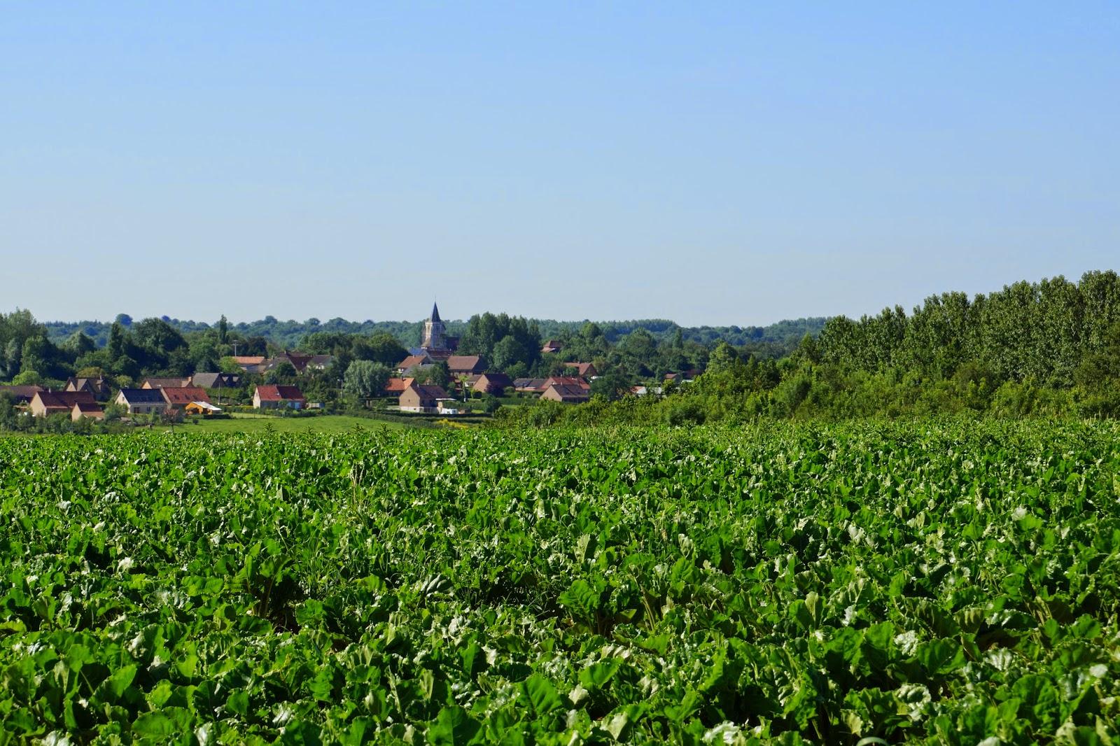 Rando wardrecques 12 juin 2014 la plaine de clety - Culture haricot vert plein champ ...