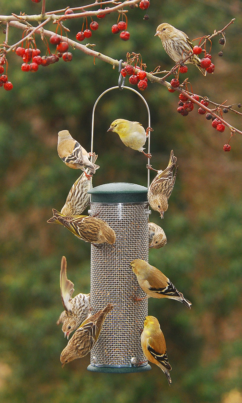 wild birds unlimited disappearance of usual birds at backyard feeder