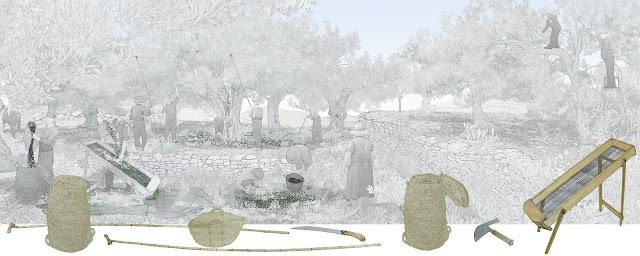 la oliva , el vareo