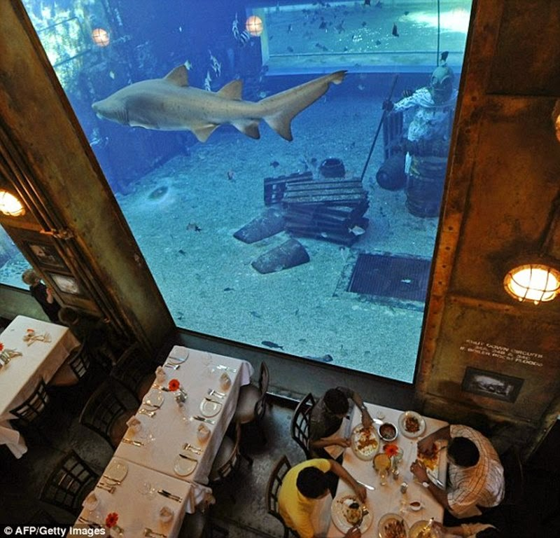 Snorkelling and dining all in one. A shark swims past the restaurant's walls as oysters are cracked open