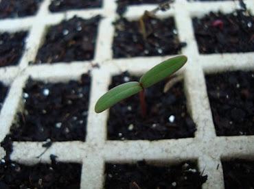 É tempo de plantar