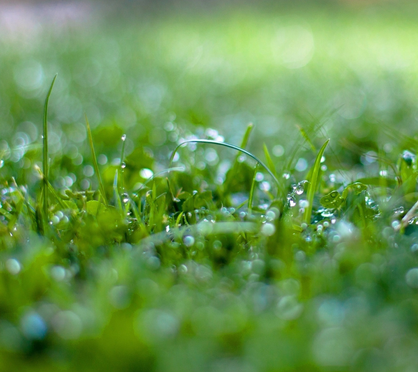 all best picos: galaxy s3 wallpaper - wet grass bokeh - hd