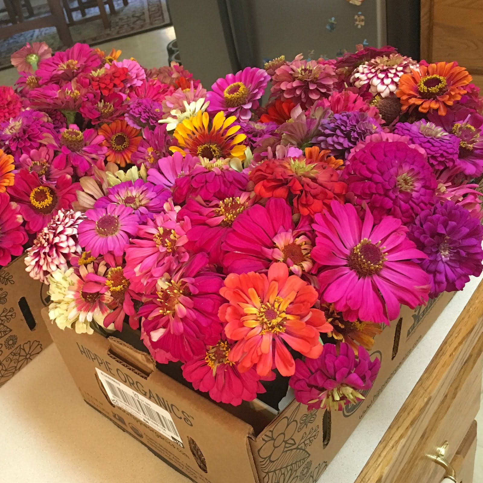 Latest Zinnia Donation of 14 bouquets