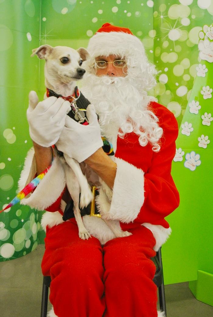 20 Hilarious Santa Photo Fails - Mums Lounge