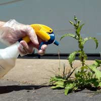 Weed Killer Spray