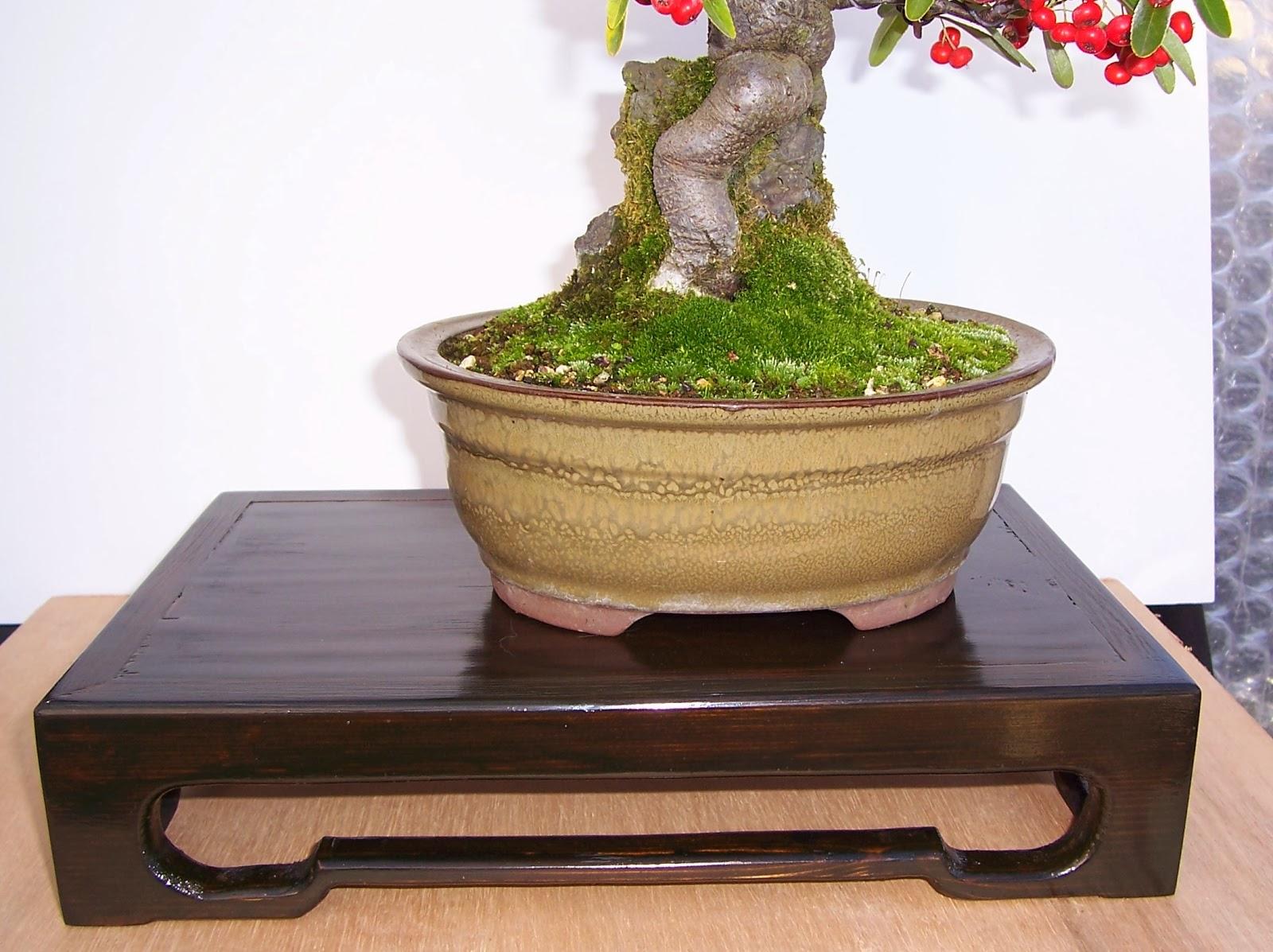 MiKo Bonsai Homemade Bonsai Display Stand Finished