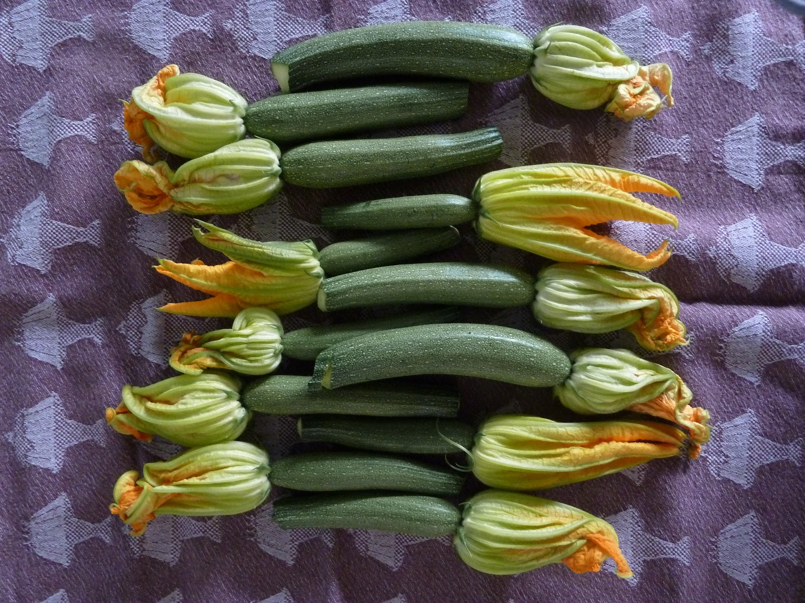 berall nirgendwo gef llte zucchini bl ten auf tomatenso e ein absolutes traumgericht. Black Bedroom Furniture Sets. Home Design Ideas