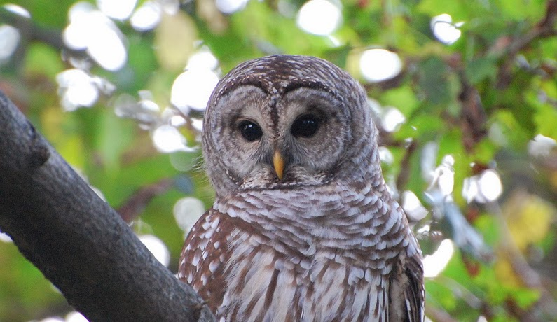 Newburyport Birders