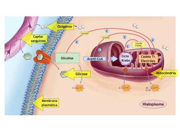 rutas anabolicas y metabolicas pdf