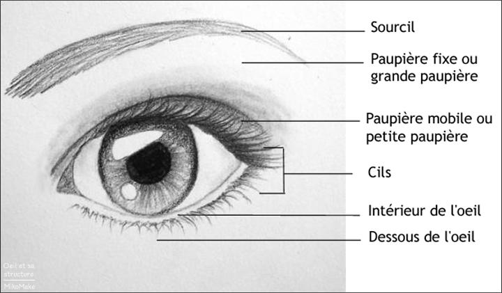 Quelle est la structure de l'oeil en maquillage ?