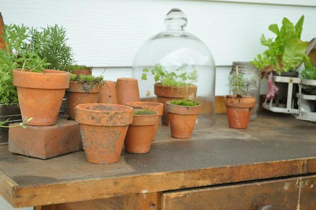 Moss in pots. so pretty!