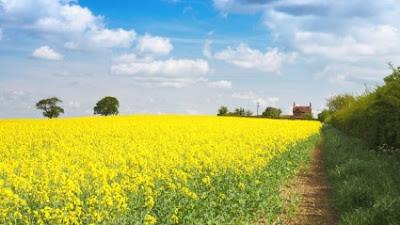 επιβολή φόρου στα καλλιεργούμενα αγροτεμάχια