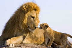 Library Lions Roar