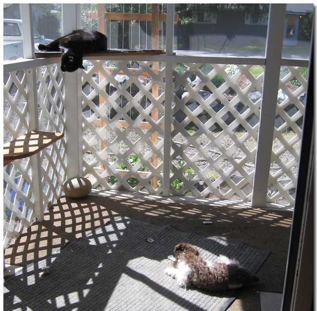 Neighbors Dog Barking In Apartment