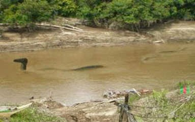 naga di sungai mahakam