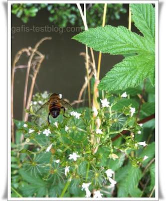 Biene auf Blümchen