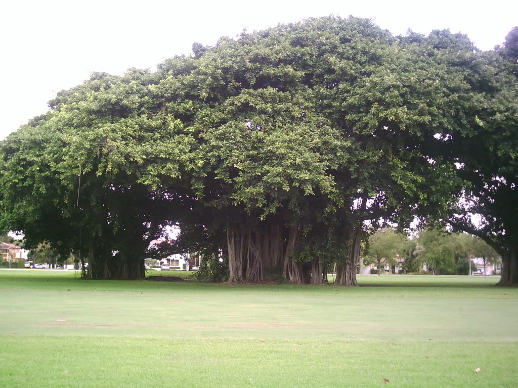 the banyan tree Like a banyan tree, byu's branches extend and grow roots far beyond itself in order to continue current progress, we must recommit to excellence.