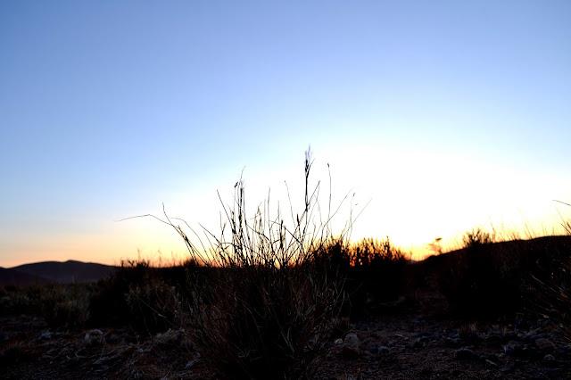 Grass at sunrise in Sossusvlei