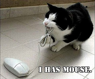 gambar hewan lucu