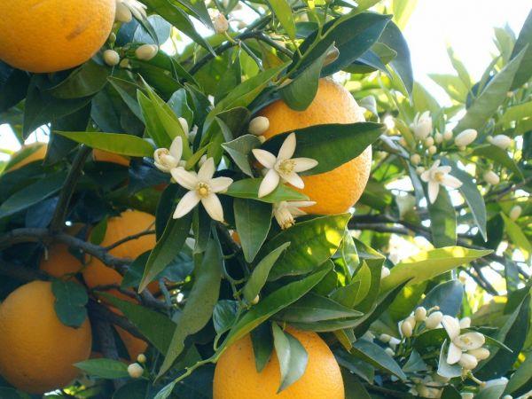 Oğlak Burcunun Bitkileri Hangileridir?