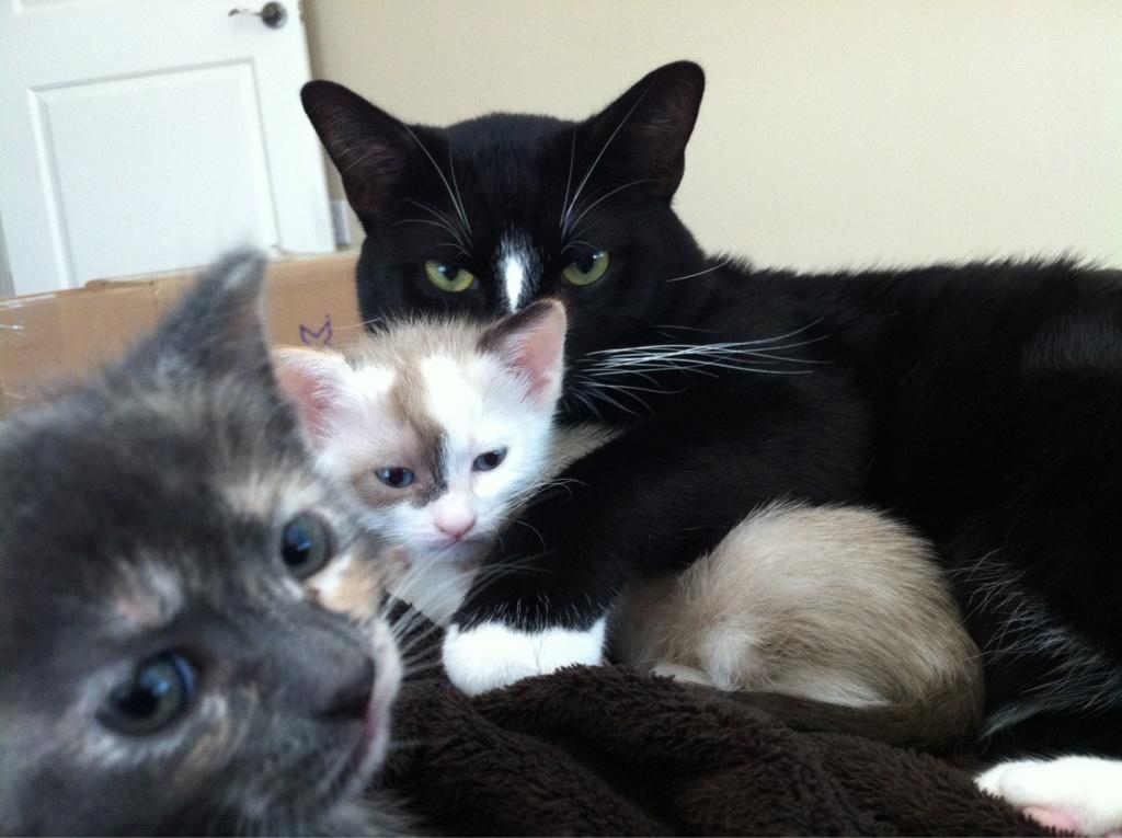 Сумасшедшие коты, фото 19