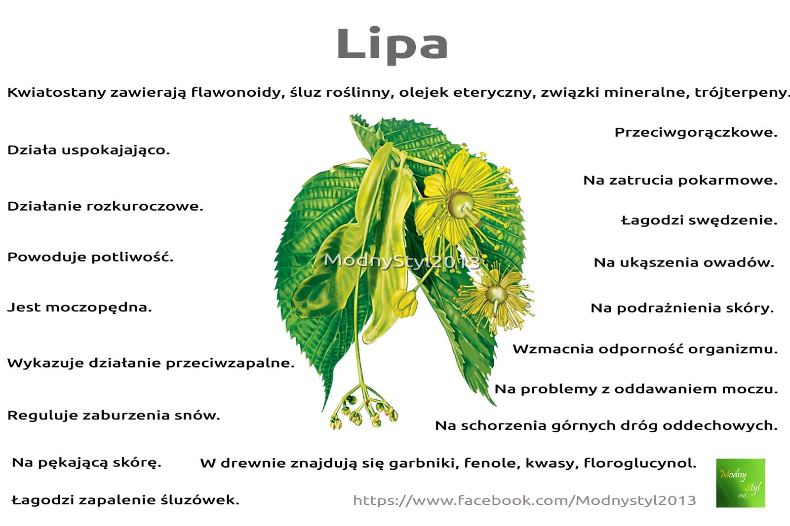 Lecznicze właściwości kwiatostanu i drewna lipy