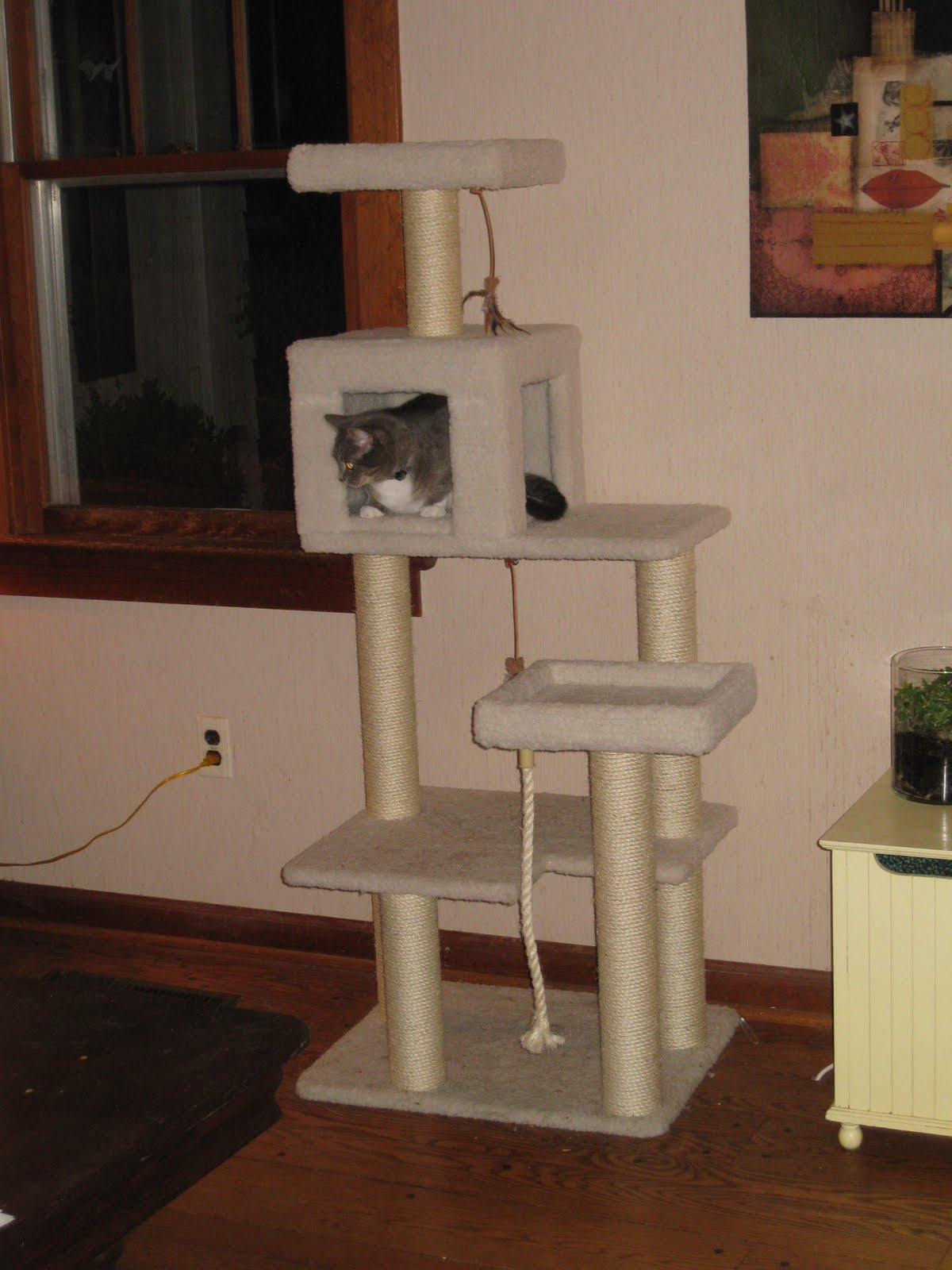 Here Kitty Kitty Review Petco Premium Cat Tree