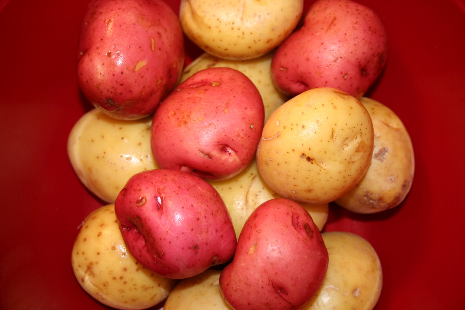 Red and Yukon Gold Potatoes.
