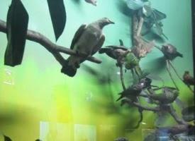 Jenis Jenis Burung di Museum Zoologi Bogor