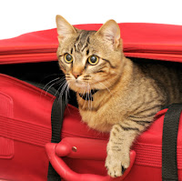 pet relocation kucing