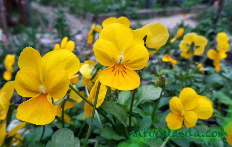 La naturaleza en casa flores de temporada for Plantas temporada
