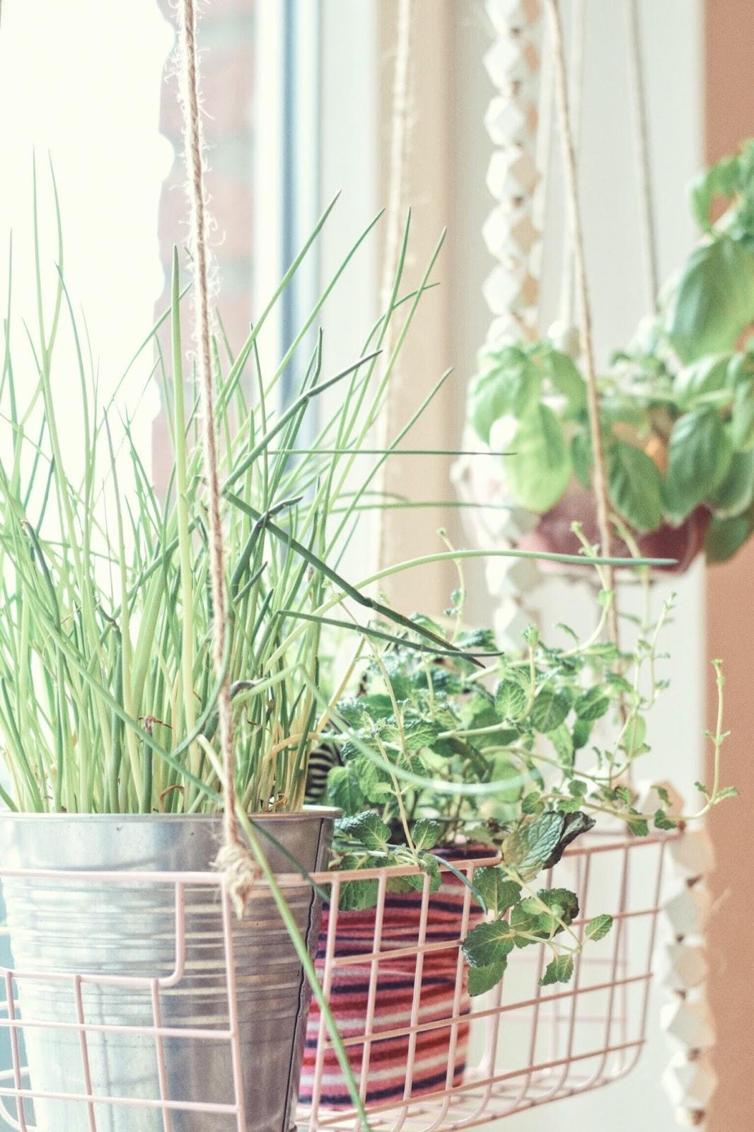 kitchen greens meine kräuter küche | zimtzebra