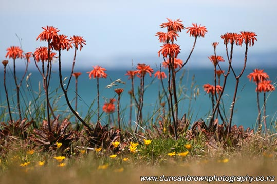 Orange and yellow flowers in Whirinaki photograph