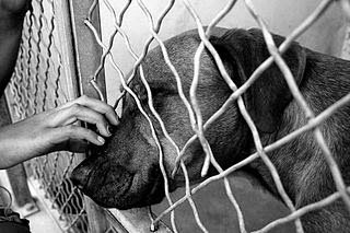 Dogs in Shelters (Ph Cr: Jesse Groppi/Sandbox )