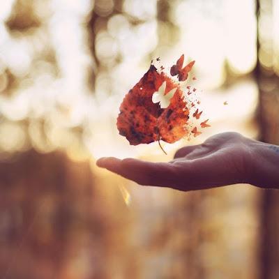 Miércoles Mudo - Deja volar tu imaginación | www.mifabula.com