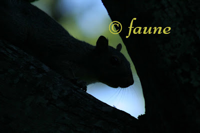 Squirrel in silhouette